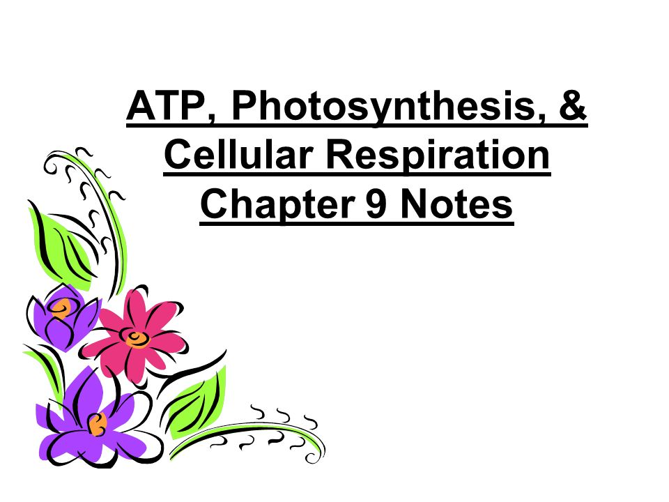 ATP, Photosynthesis, & Cellular Respiration Chapter 9 Notes
