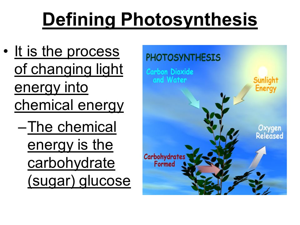 Defining Photosynthesis