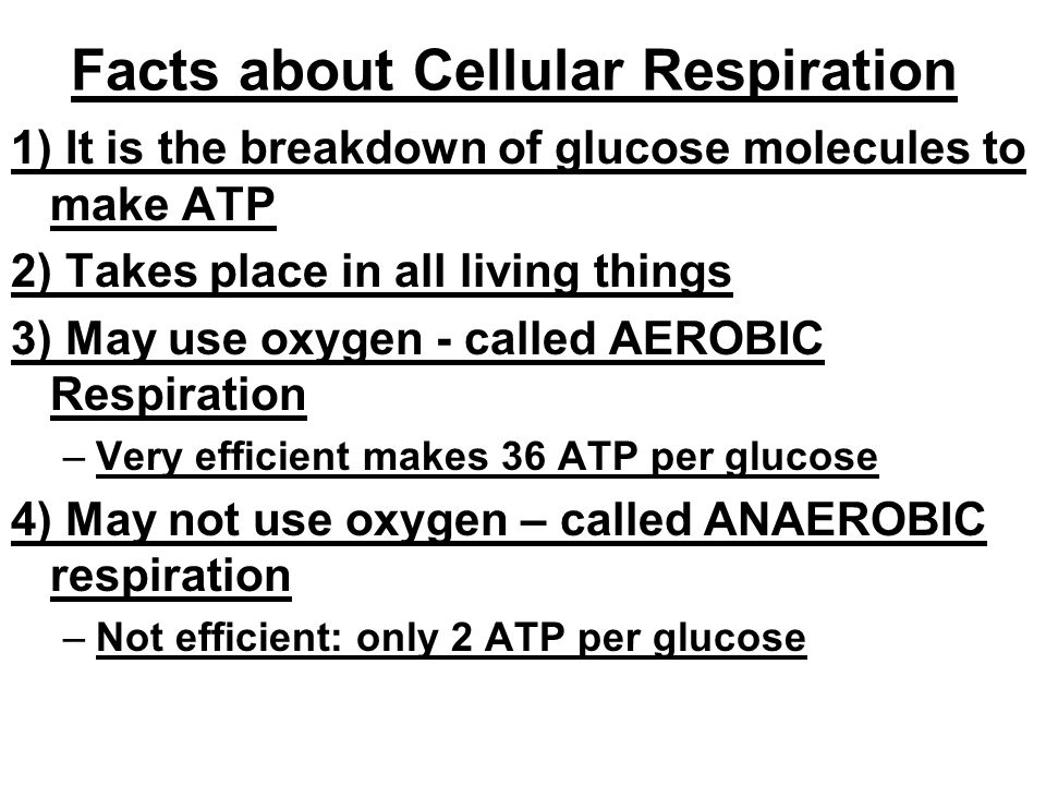Facts about Cellular Respiration