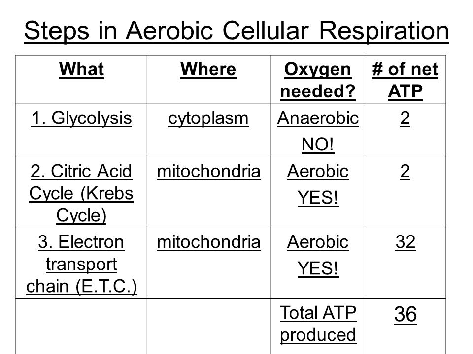 Steps in Aerobic Cellular Respiration