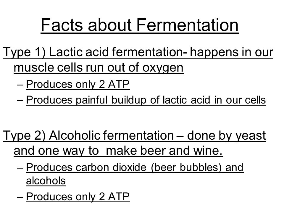 Facts about Fermentation