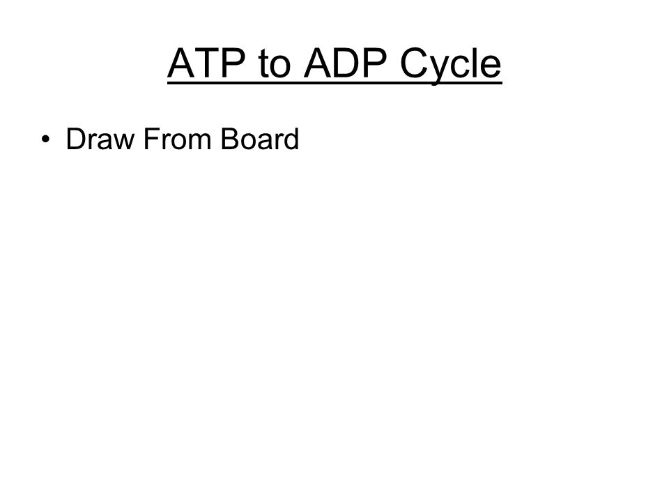 ATP to ADP Cycle Draw From Board