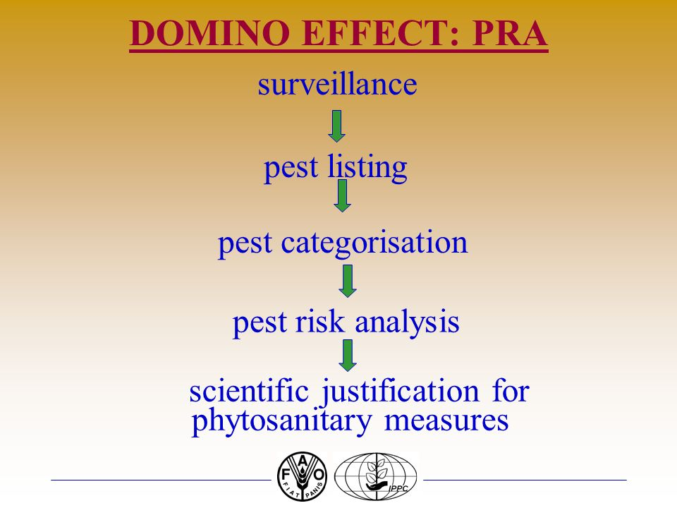 DOMINO EFFECT: PRA surveillance pest listing pest categorisation