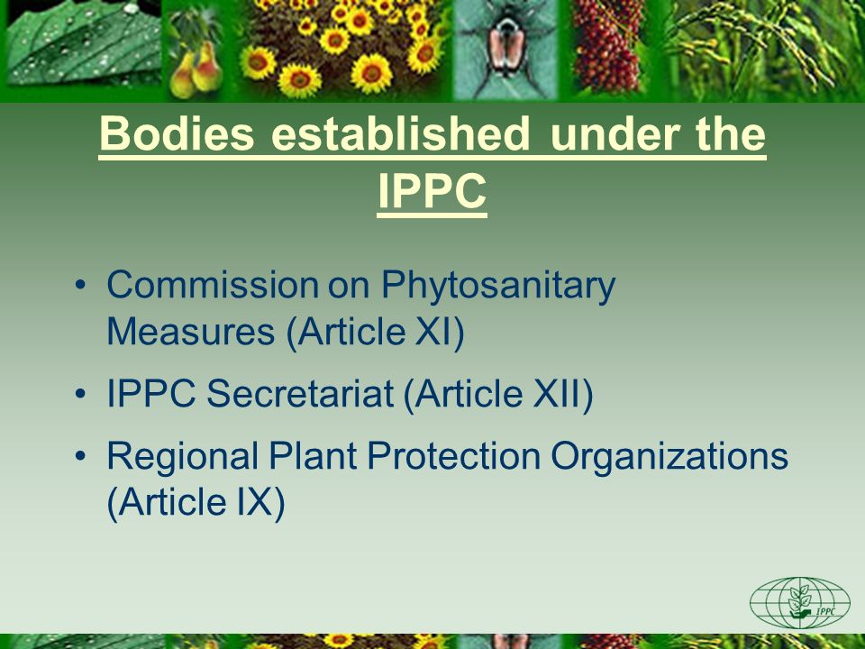 Bodies established under the IPPC