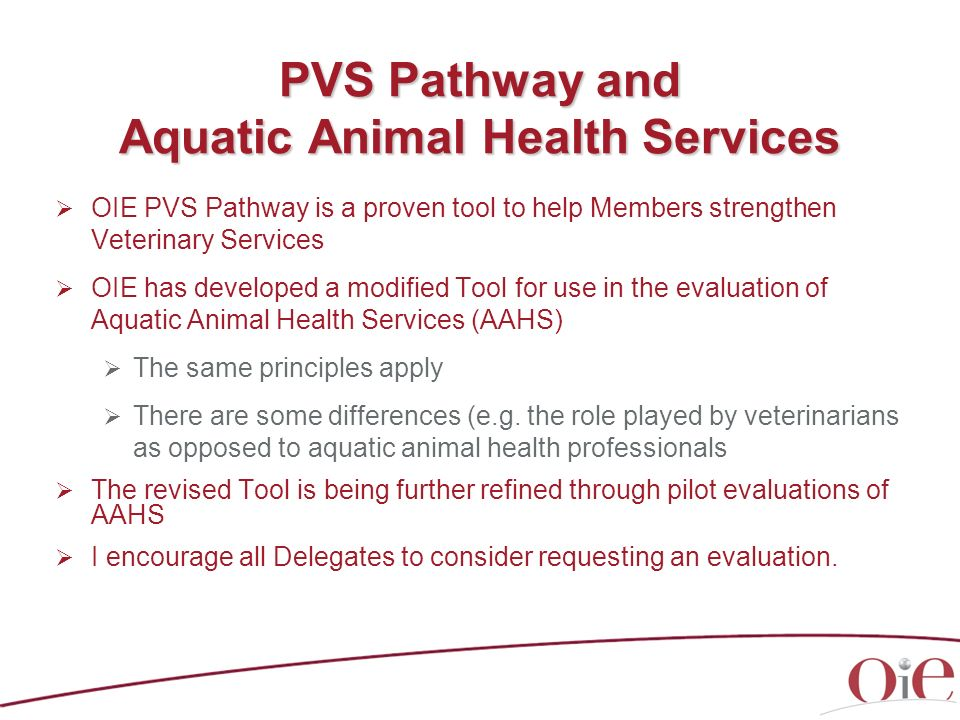 PVS Pathway and Aquatic Animal Health Services
