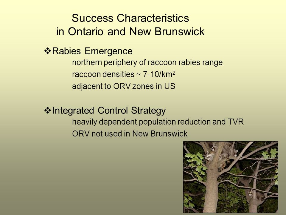 Success Characteristics in Ontario and New Brunswick