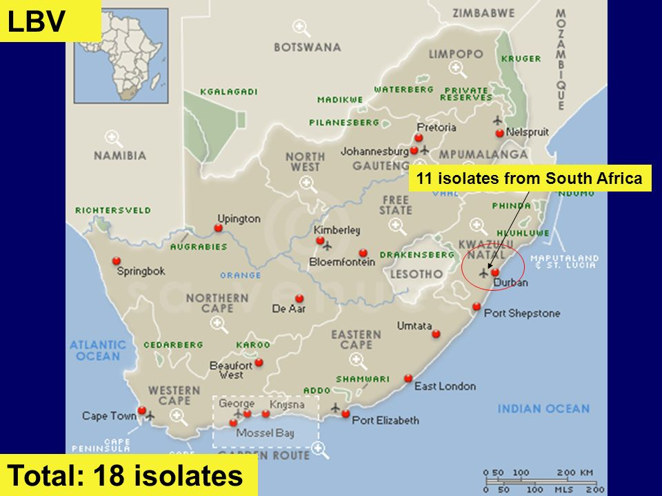LBV 11 isolates from South Africa Total: 18 isolates