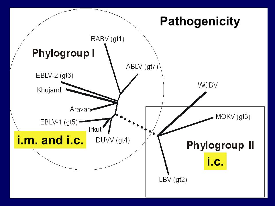 Pathogenicity i.m. and i.c. i.c.