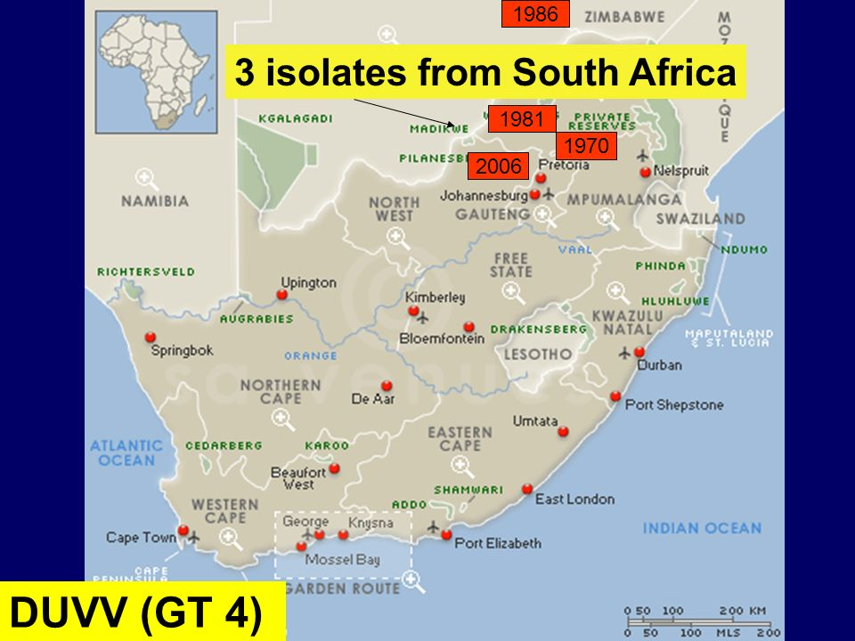 1986 3 isolates from South Africa 1981 1970 2006 DUVV (GT 4)
