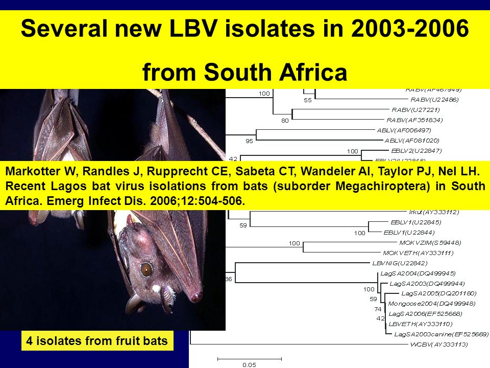 Several new LBV isolates in 2003-2006