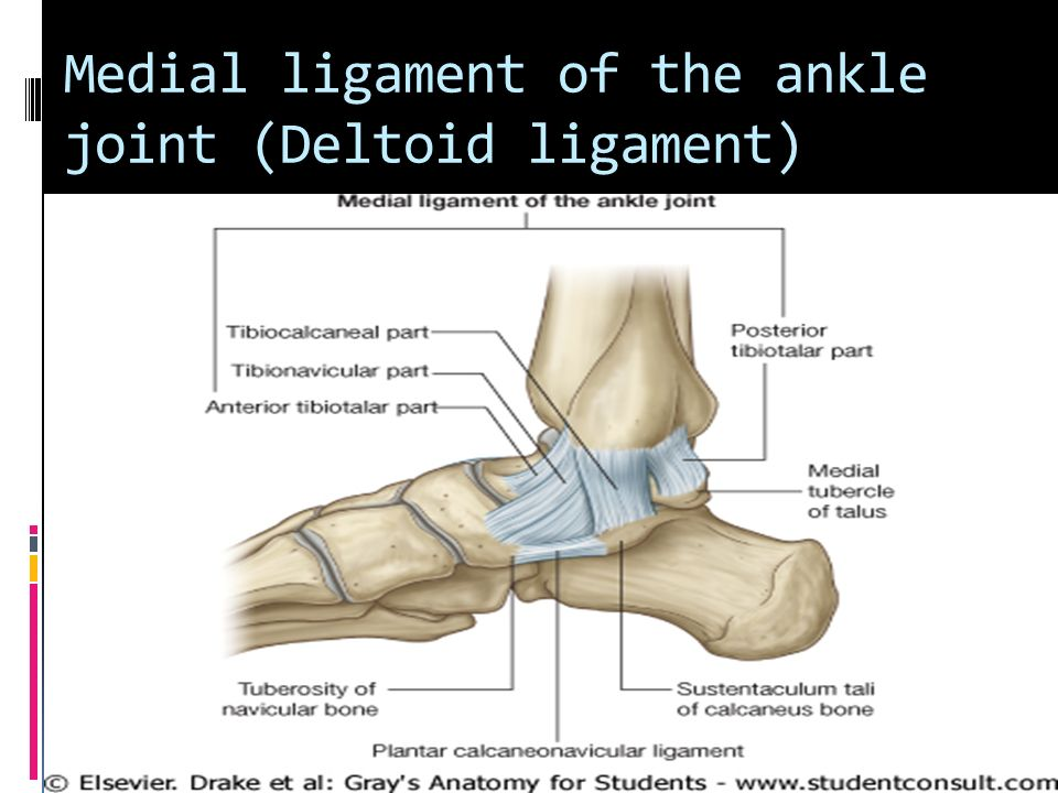 Joints of the Lower Limb - ppt video online download