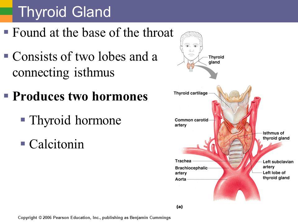 The Endocrine System. - ppt video online download