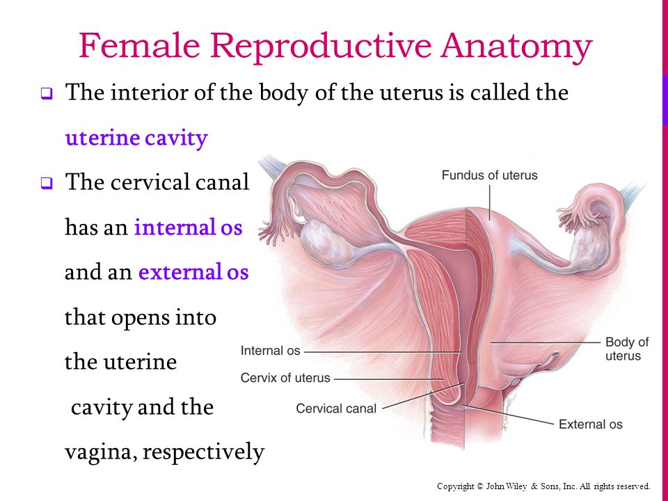 The Reproductive Systems Ppt Video Online Download