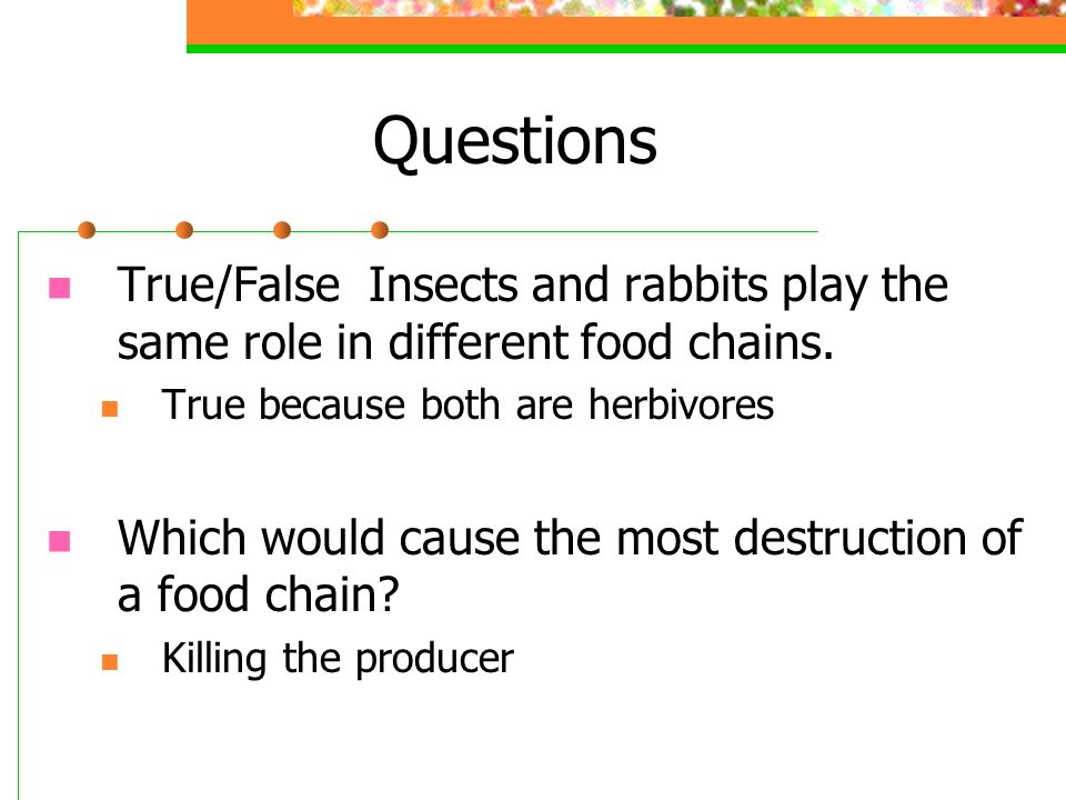 Questions True/False Insects and rabbits play the same role in different food chains. True because both are herbivores.