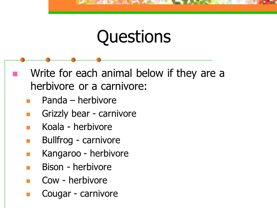 Questions Write for each animal below if they are a herbivore or a carnivore: Panda – herbivore. Grizzly bear - carnivore.