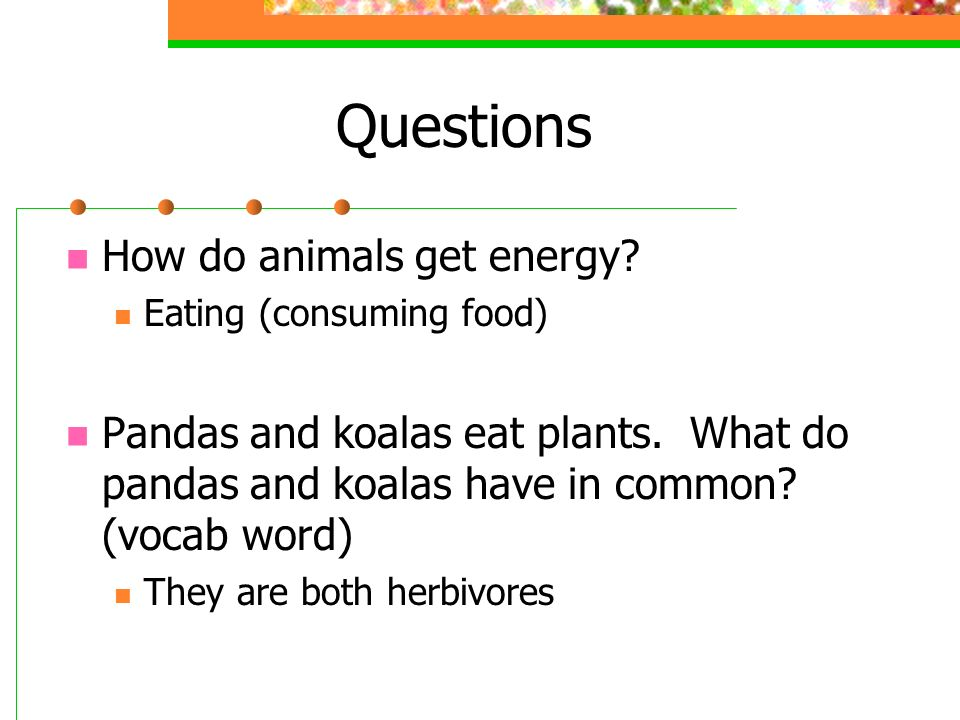 Questions How do animals get energy
