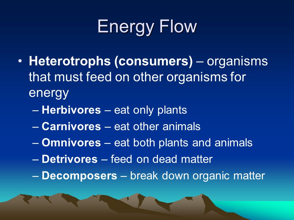 Energy Flow Heterotrophs (consumers) – organisms that must feed on other organisms for energy. Herbivores – eat only plants.