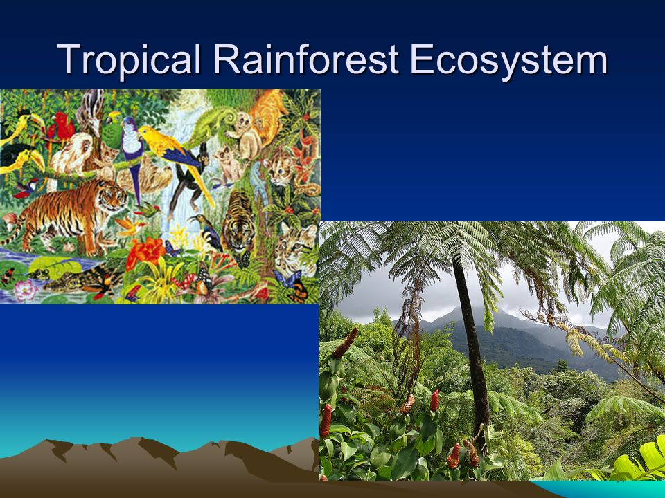 Tropical Rainforest Ecosystem