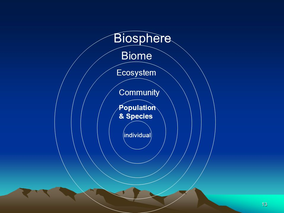 Biosphere Biome Ecosystem Community Population & Species individual