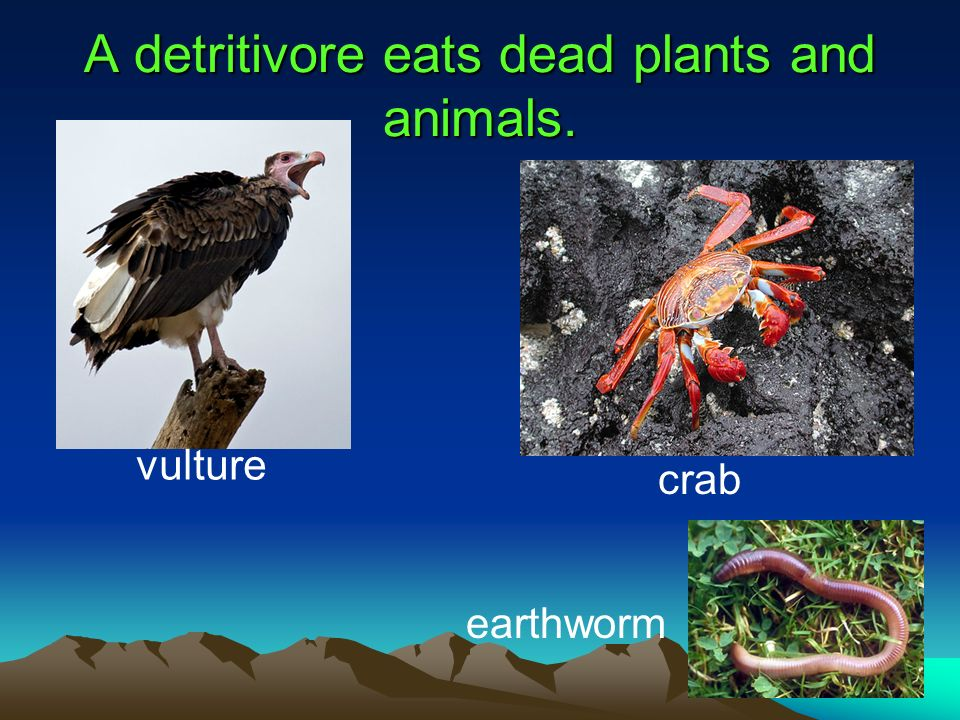 A detritivore eats dead plants and animals.