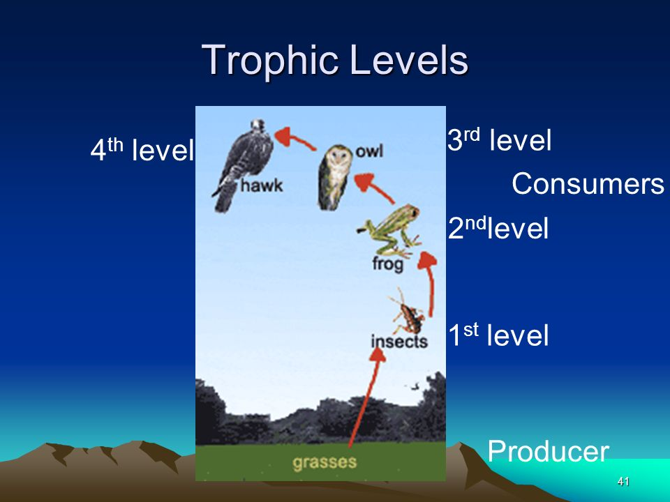 Trophic Levels 3rd level 4th level Consumers 2ndlevel 1st level