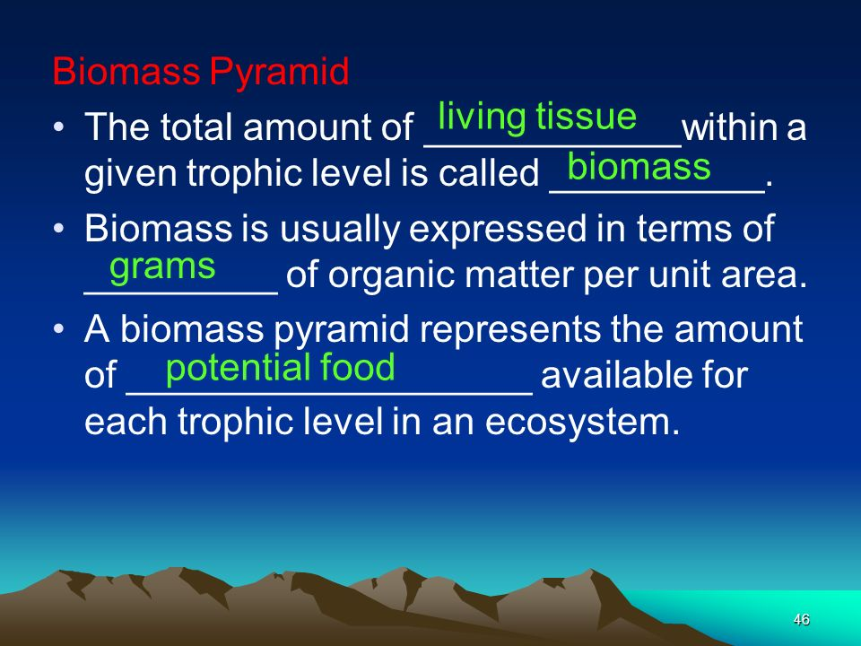 Biomass Pyramid The total amount of ____________within a given trophic level is called __________.