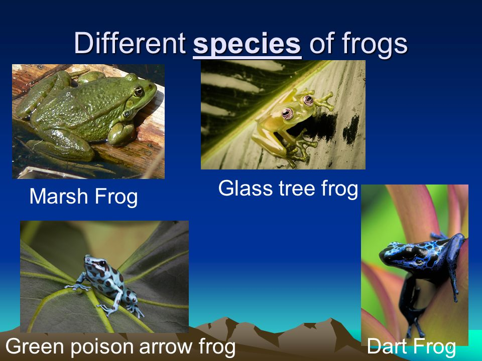 Different species of frogs