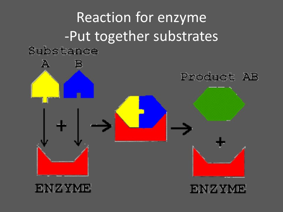 Reaction for enzyme -Put together substrates