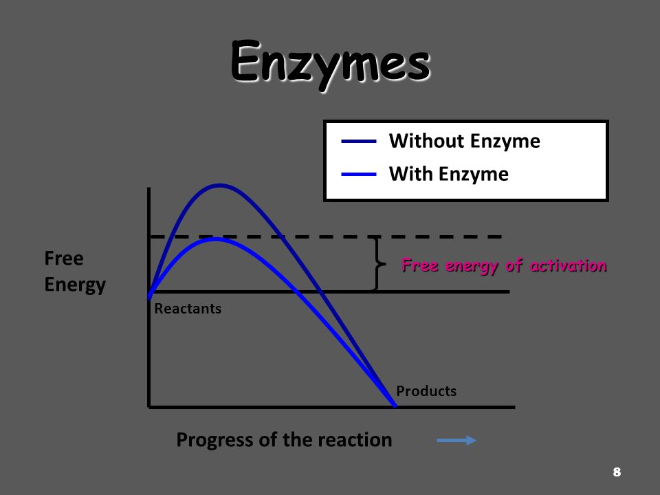 Enzymes Without Enzyme With Enzyme Free Energy