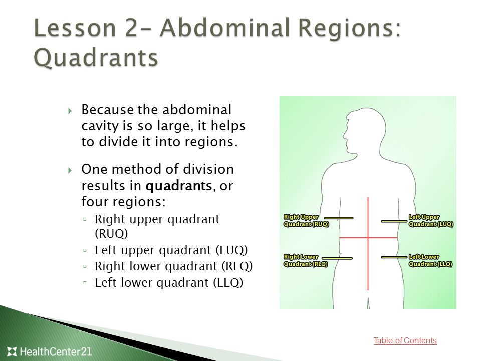Lesson 2– Abdominal Regions: Quadrants