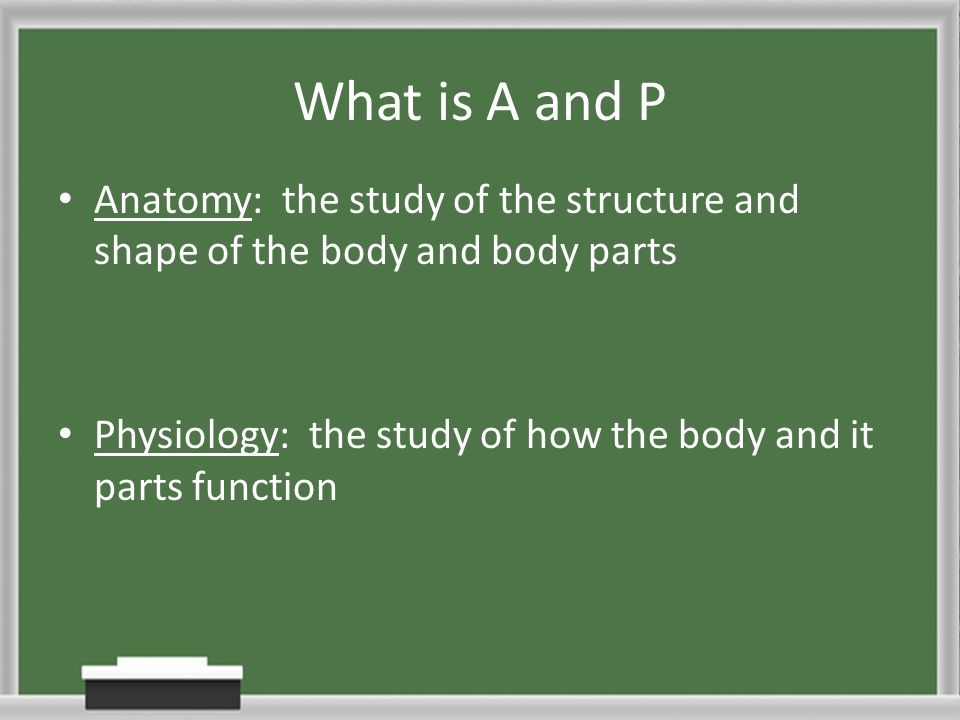 What Is The Relationship Between Form And Function In Nature Ppt