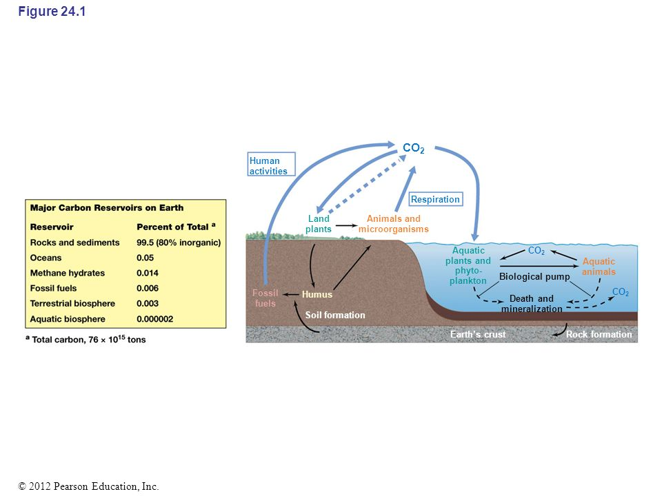 241 the carbon cycle carbon is cycled through all of earths major figure 241 co2 figure 241 the carbon cycle ccuart Image collections