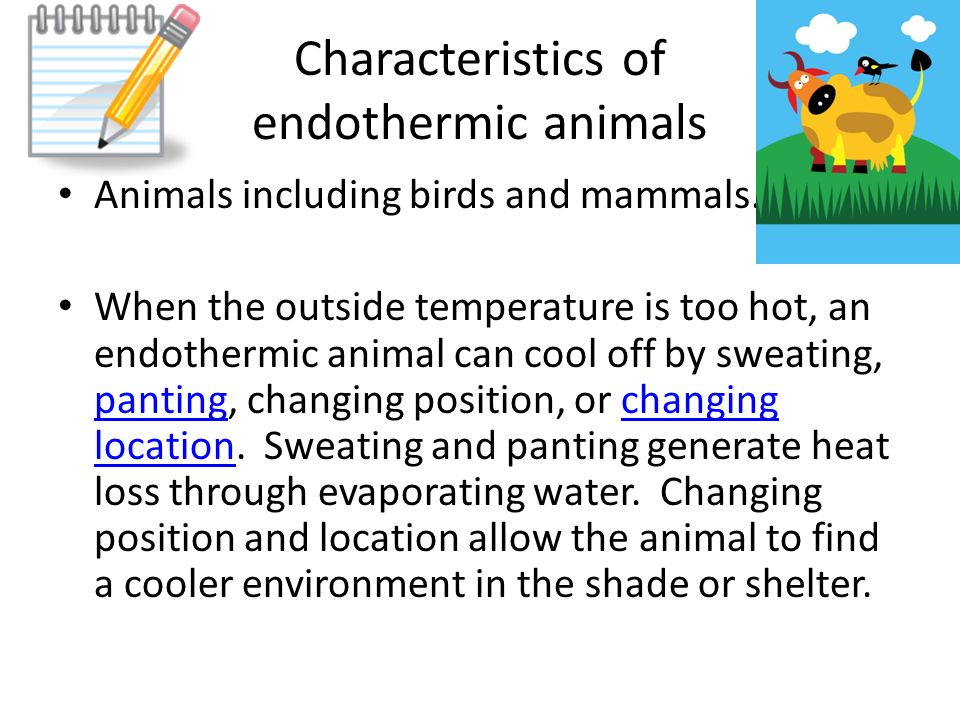 Endothermic And Ectothermic Animals Standard Ppt Video Online Download