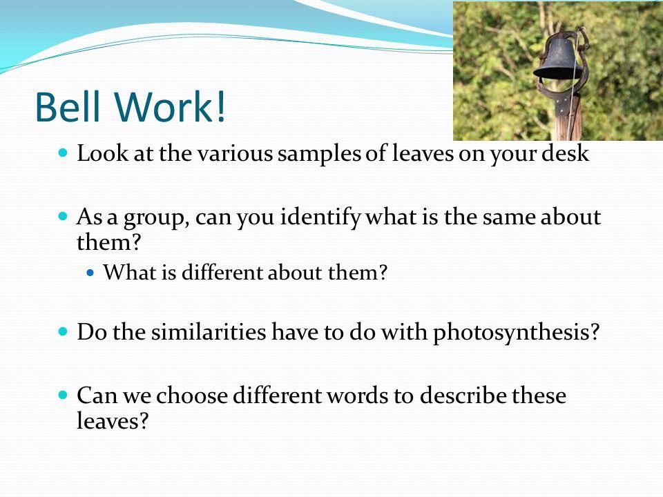 Understanding Leaf Anatomy And Morphology - ppt video online download
