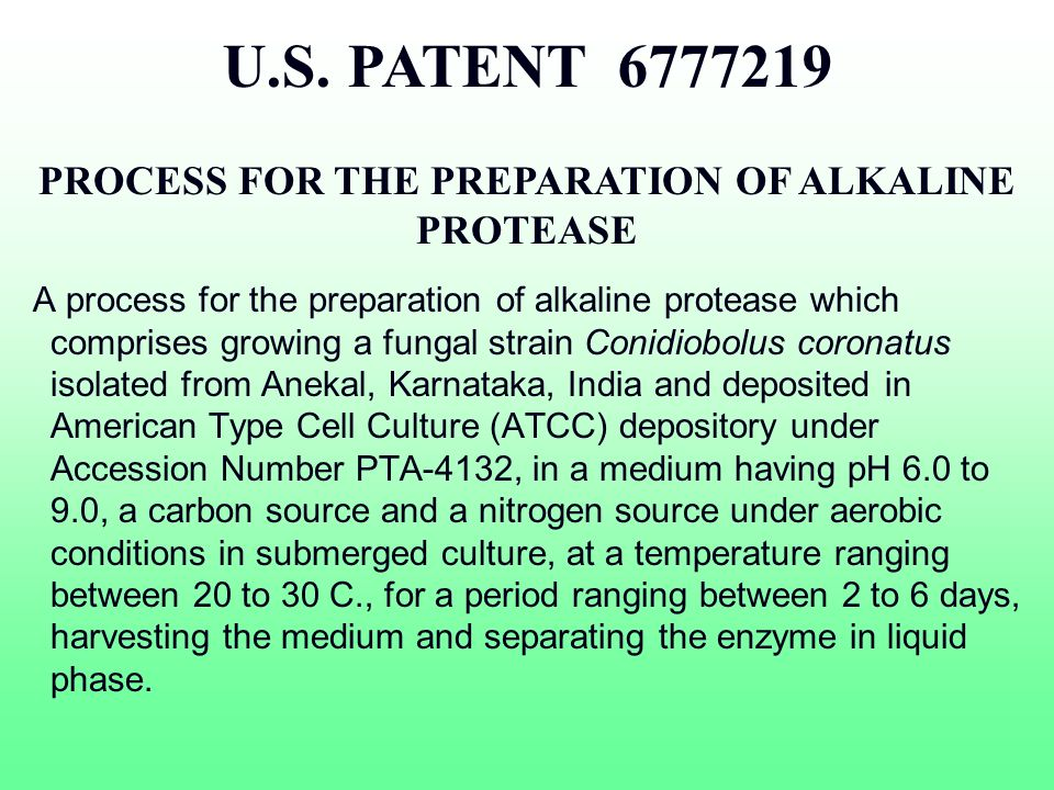 PROCESS FOR THE PREPARATION OF ALKALINE PROTEASE