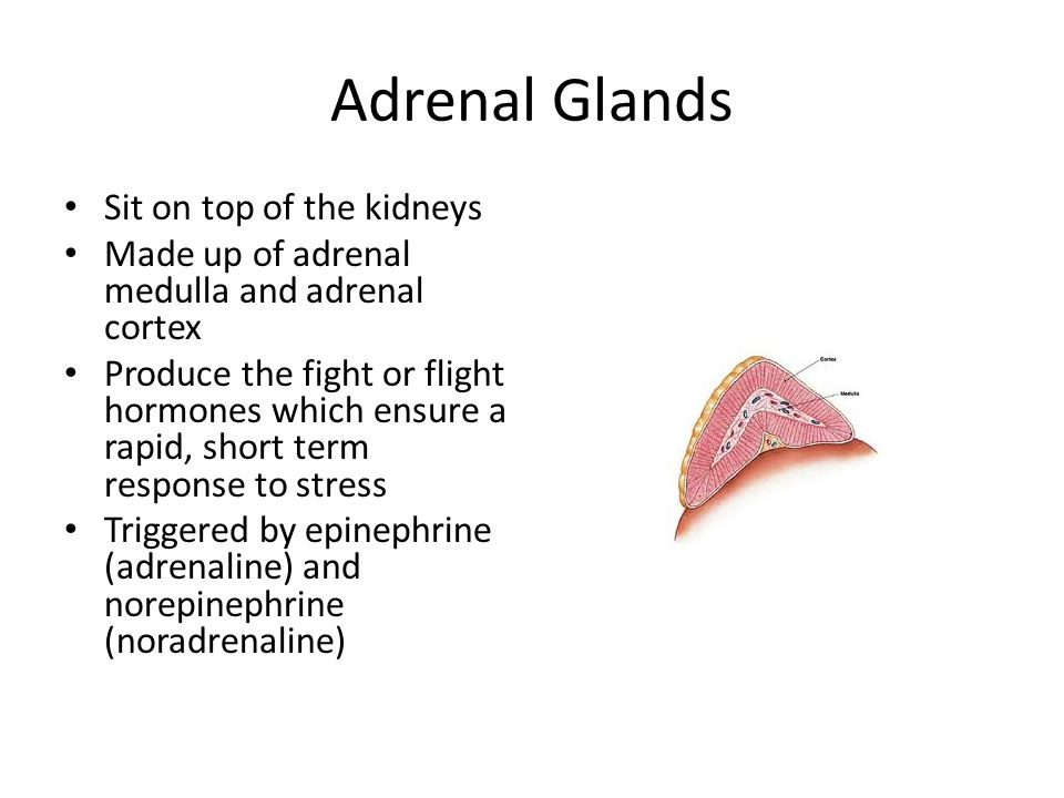 Adrenal Glands Sit on top of the kidneys