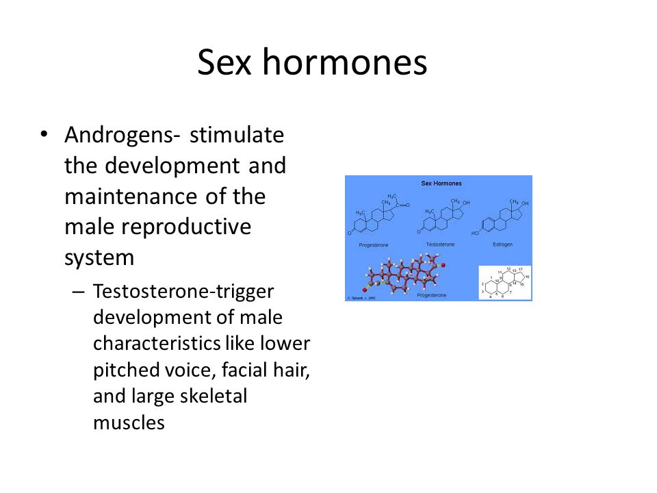 Sex hormones Androgens- stimulate the development and maintenance of the male reproductive system.