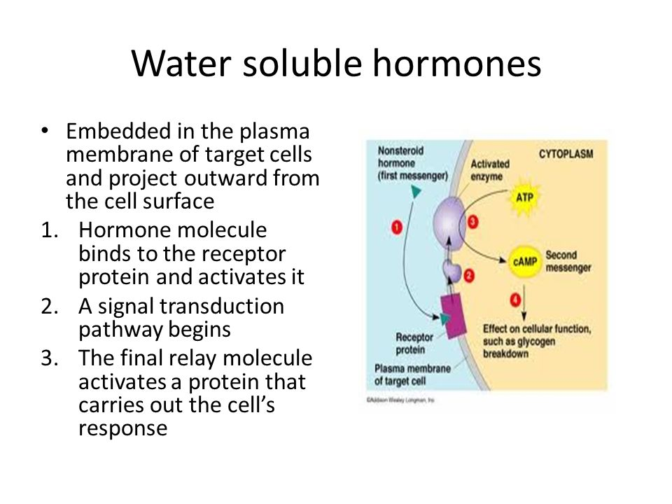 Water soluble hormones