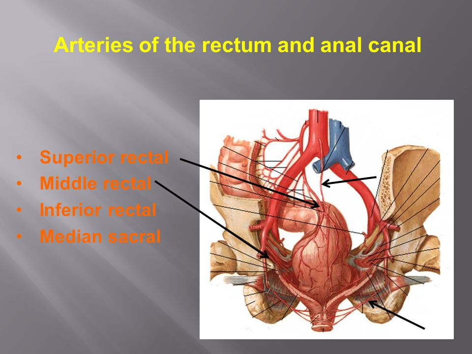 Rectum Anal Canal Ppt Video Online Download