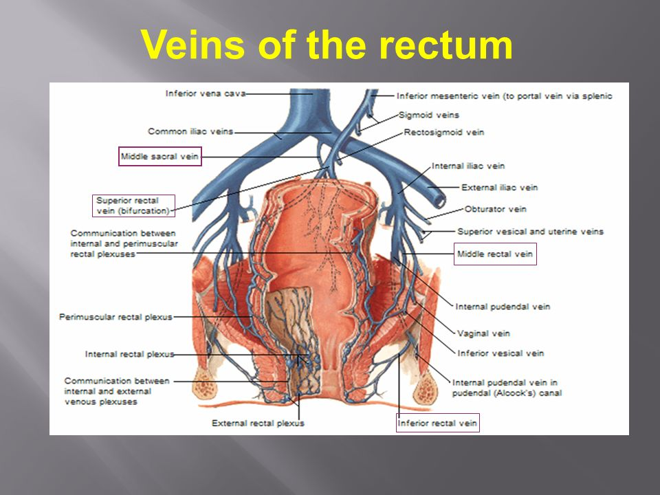 Rectum & Anal canal. - ppt video online download