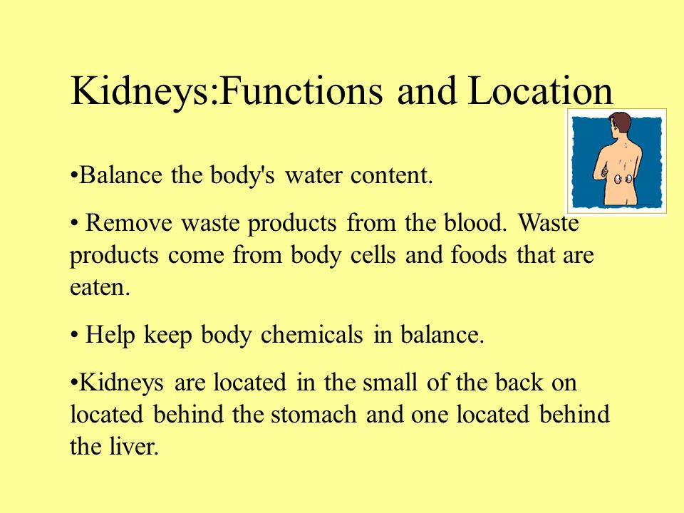 The Urinary System Ppt Video Online Download