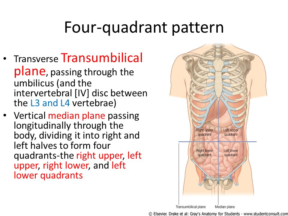 Contemporary Upper Left Quadrant Anatomy Pattern - Anatomy And ...