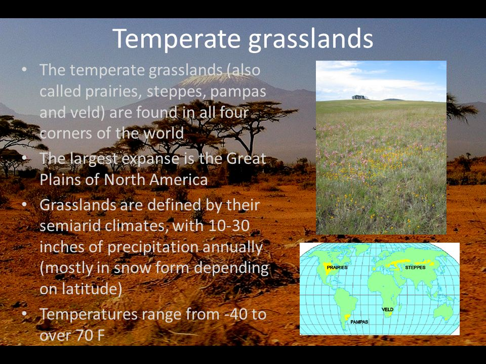 Temperate+grasslands+The+temperate+grasslands+%28also+called+prairies%2C+steppes%2C+pampas+and+veld%29+are+found+in+all+four+corners+of+the+world