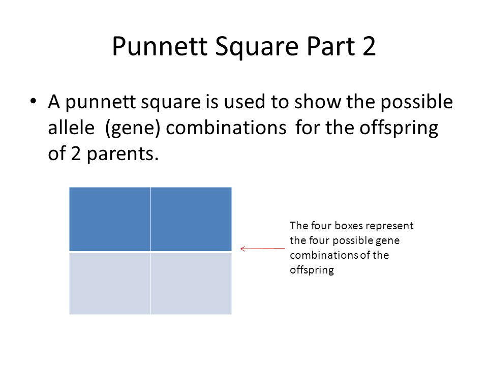 Punnett Square Part 2 A punnett square is used to show the possible allele (gene) combinations for the offspring of 2 parents.