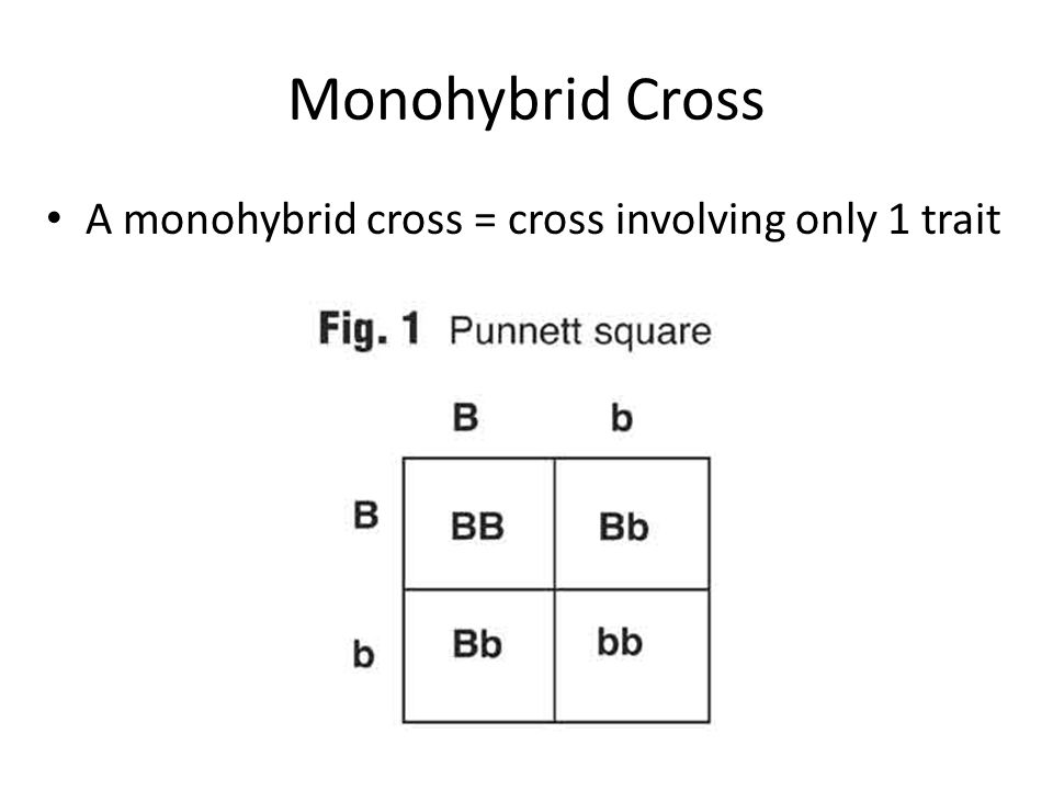 Monohybrid Cross A monohybrid cross = cross involving only 1 trait