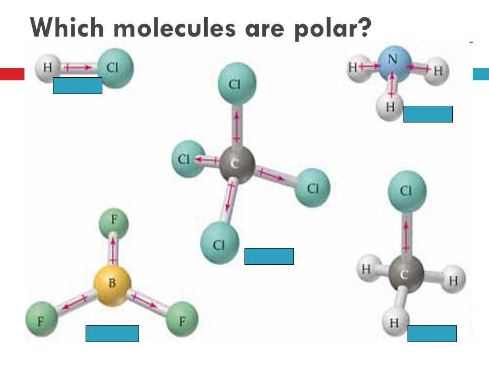 Which molecules are polar
