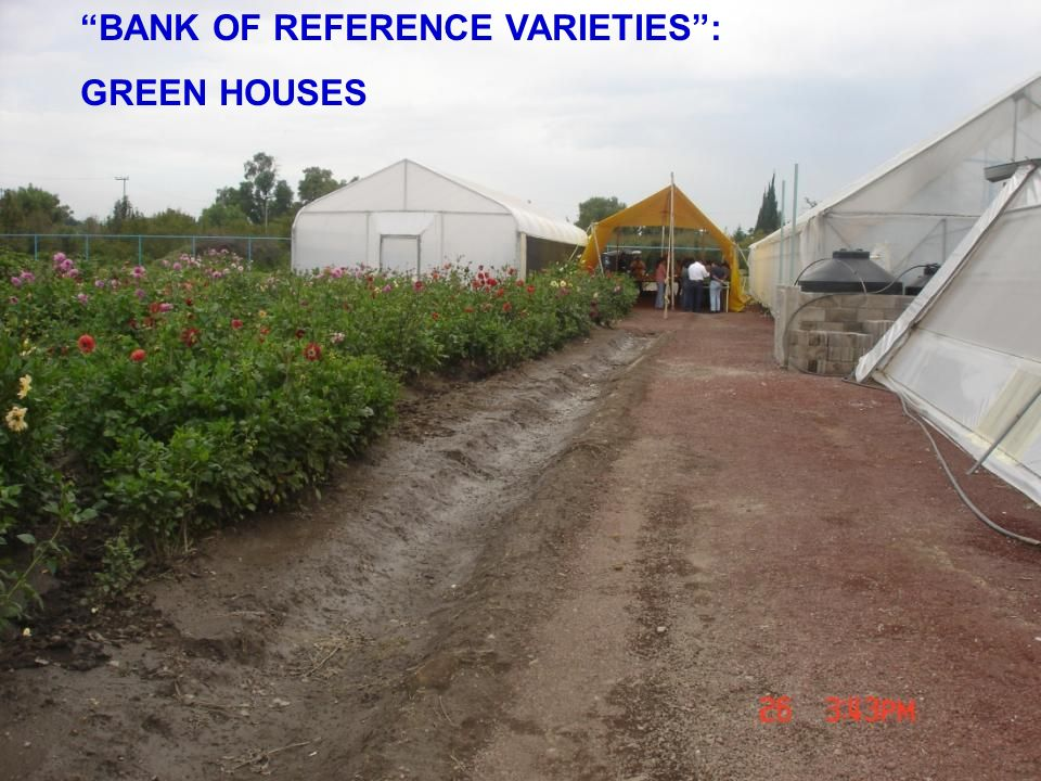 BANK OF REFERENCE VARIETIES : GREEN HOUSES