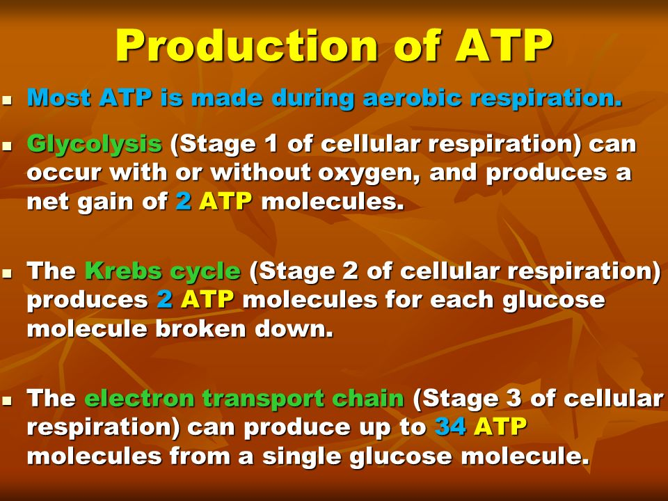 atp produced during aerobic respiration