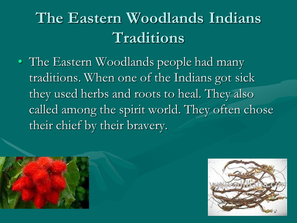 People of the Eastern Woodlands - ppt video online download