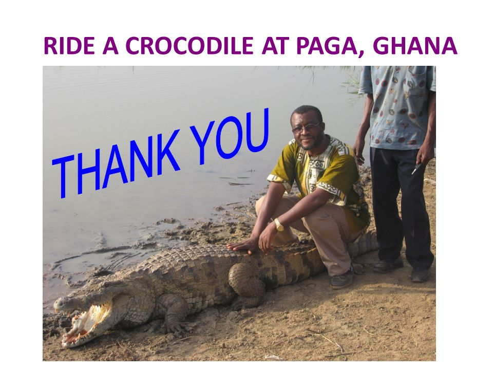 RIDE A CROCODILE AT PAGA, GHANA